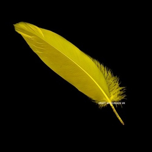 yellow-quill-feathers
