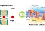 Difference Between Simple Diffusion and Facilitated Diffusion