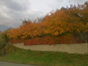 The autumn colours are definitely out and it is fantastic