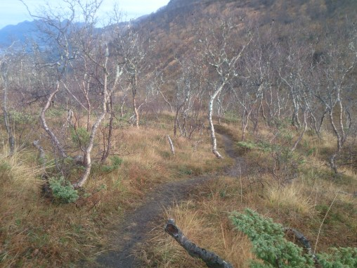 First good bit of downhill of the day, some very flowy singletrack twisting through the low (naked) trees