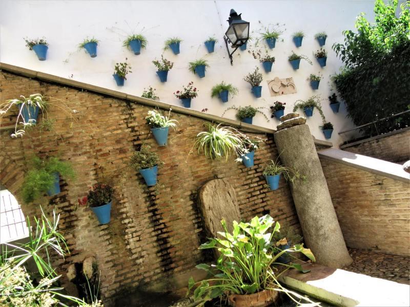 Flowers in Córdoba