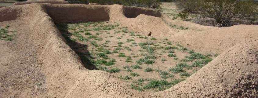 Saguora cactus near Inside of a falled Saguora cactus near Casa Grande Ruins National Monument, Coolidge, AZ