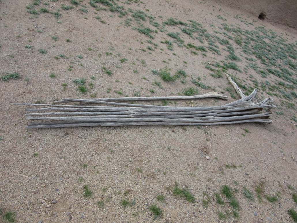 Wood from Saguaro cactus used in building Casa Grande Ruins National Monument, Coolidge, AZ