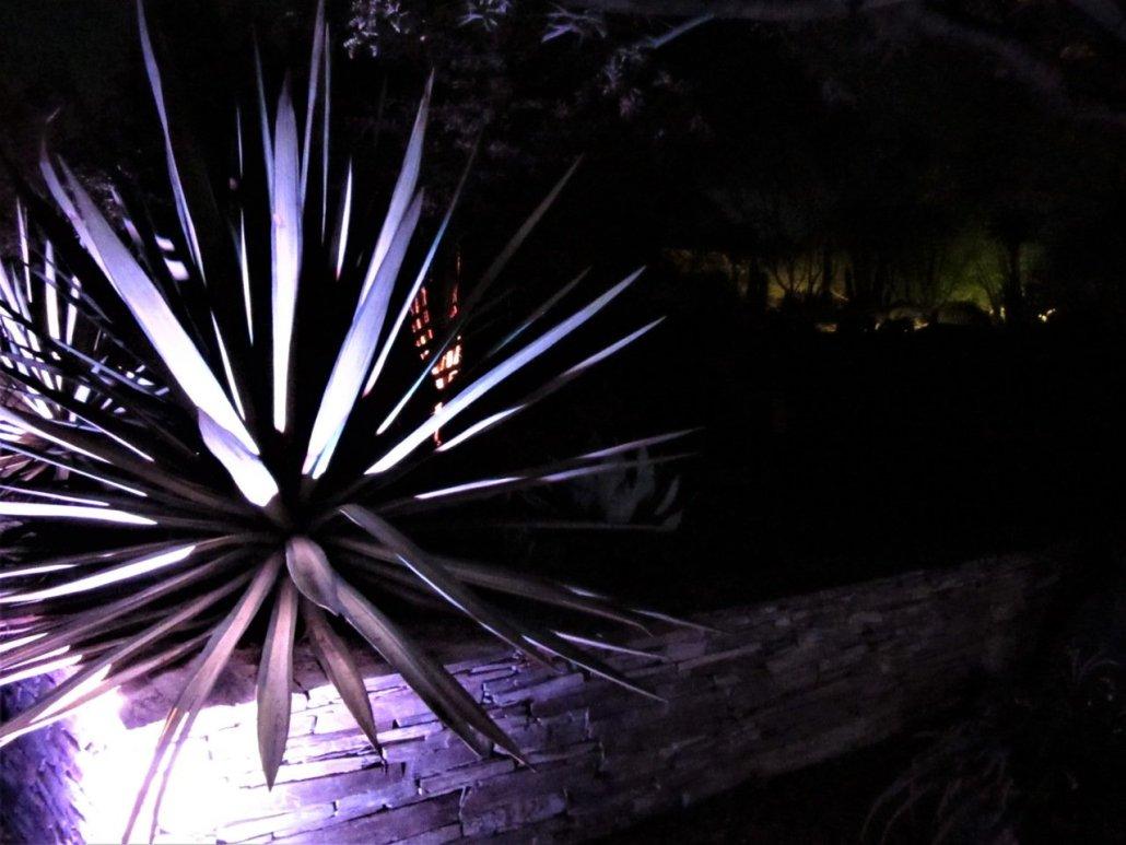 Electric desert Desert Botanical Gardens Phoenix AZ