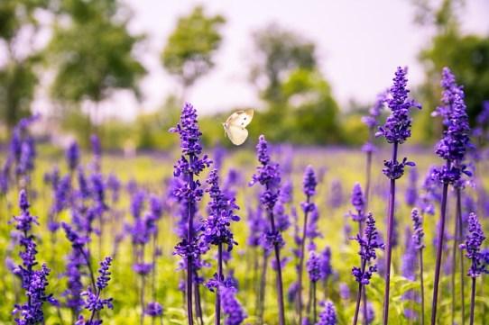 garden, nature, midlife, creative