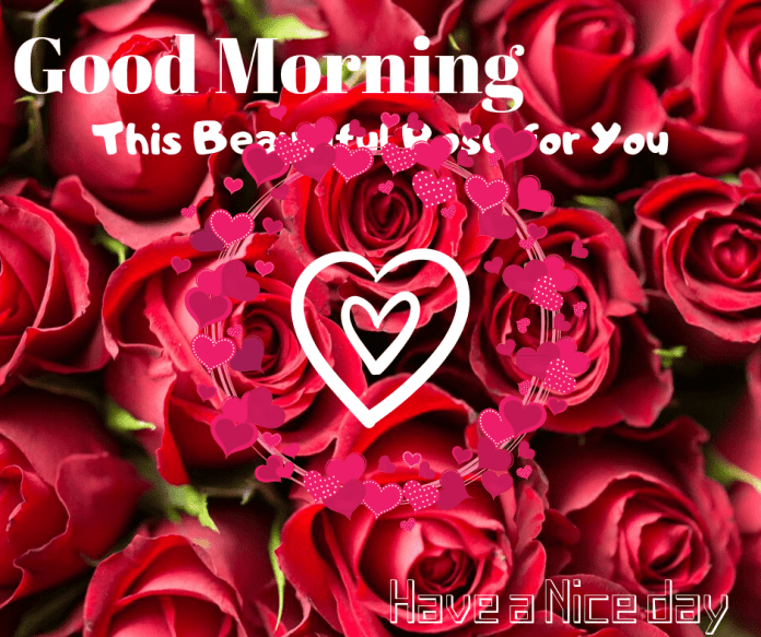 ♥ Good morning! I hope that you simply slept effectively final evening; your teddy bear will likely be dwelling tonight. Till then, have an incredible day, my candy.
