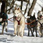 Review: Sled Dog Gun