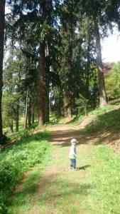 Walking at Knightshayes