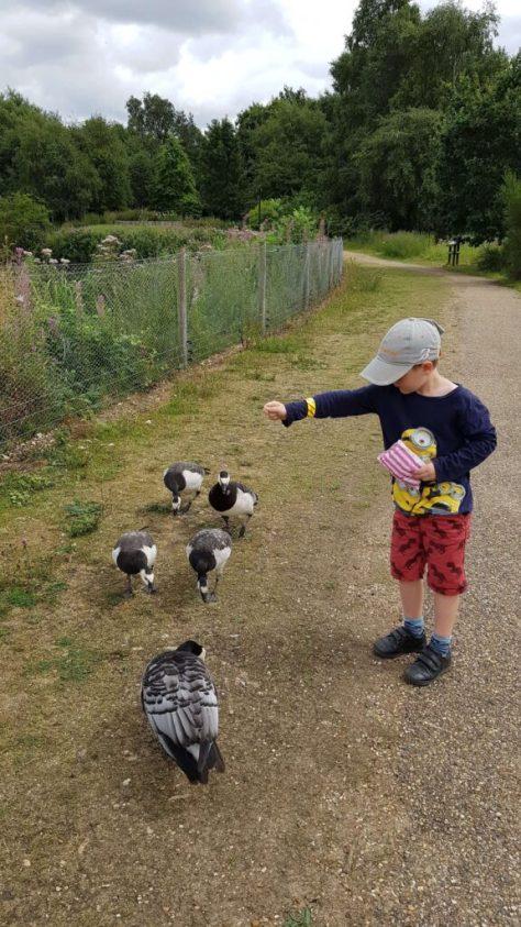 Feeding the birds at Pensthorpe
