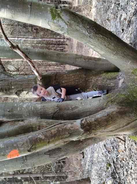 goals update - finding a geocache in a tree