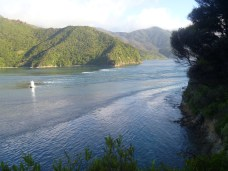 French Pass tidal flow