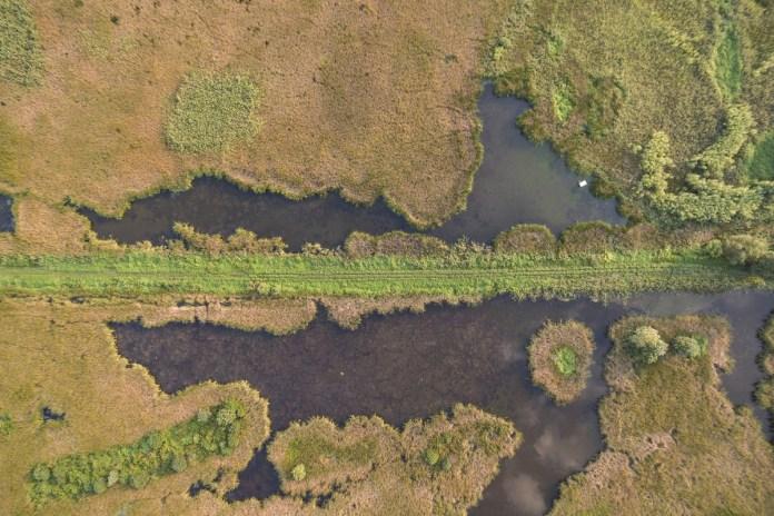 Nõvények benõtt tó Pellérd közelében