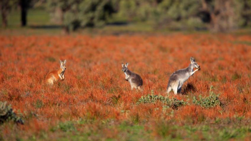 Flinders Ranges, South Australia, Australia