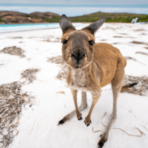 *Australia