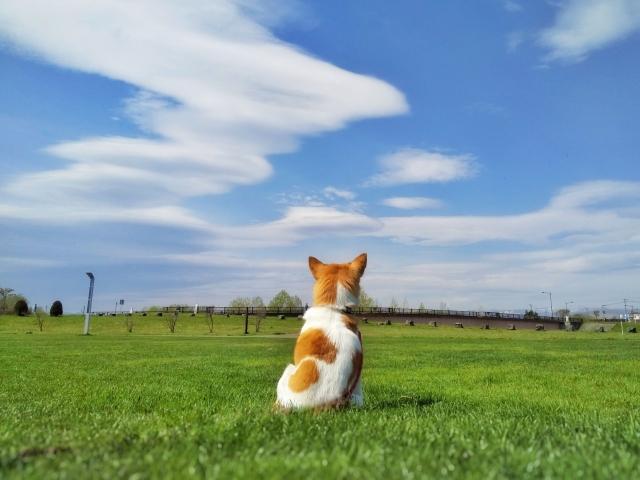 遠い空を見る犬