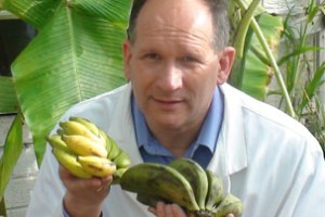 Pat Heslop-Harrison and bananas