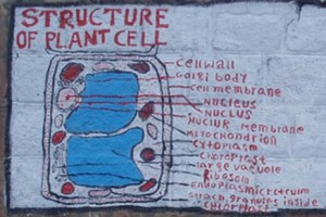 Plant Cell Structure: a school wall painting in Ethiopia