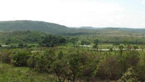 An important ecosystem: the Cerrado in Brazil