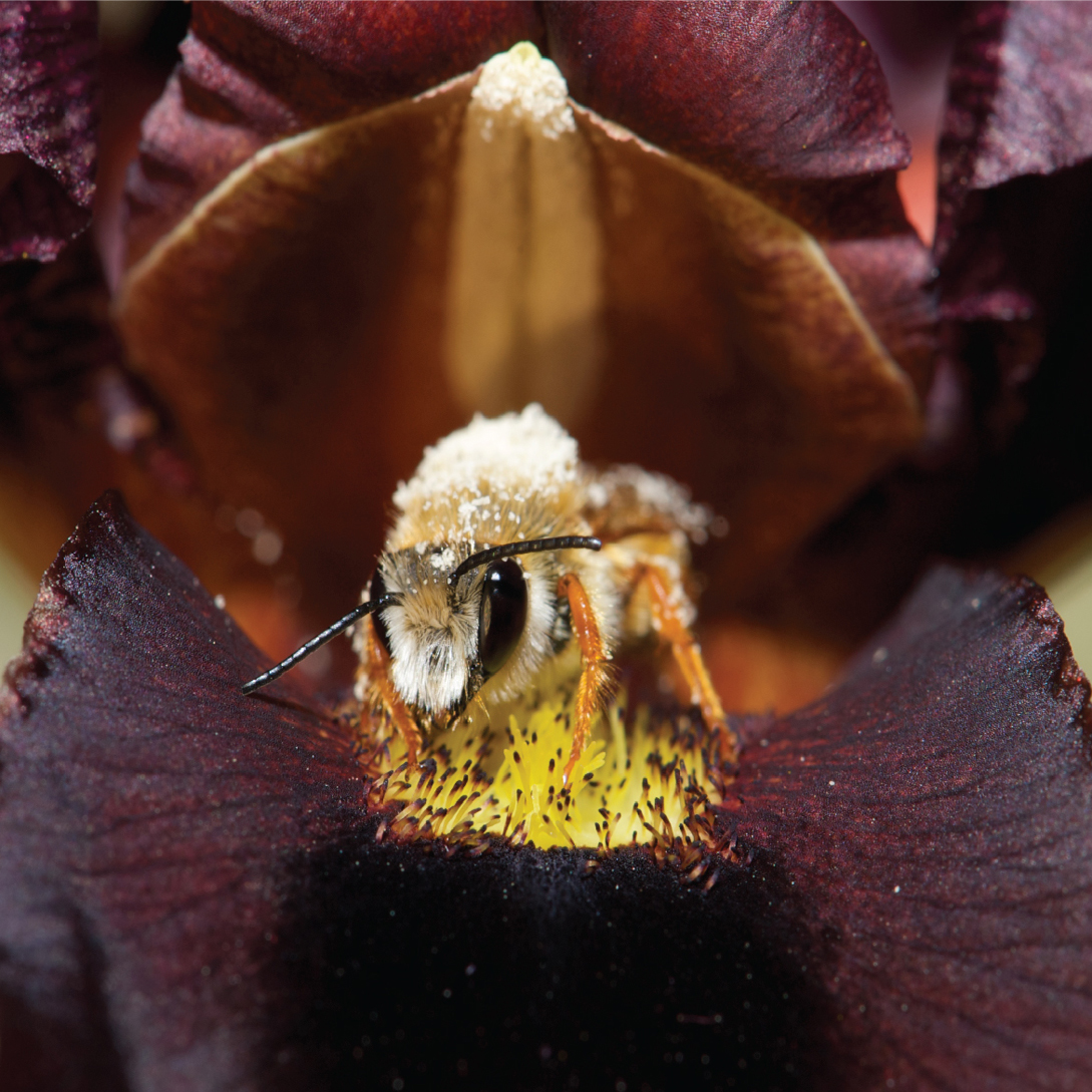A bee's eye view of flowers