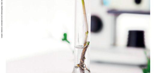 affiches_summerschools_plant science