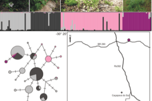 The analysis of genetic structure and variability of isolated species is of critical importance in evaluating whether stochastic or human-caused factors are affecting rare species. Low genetic diversity compromises the ability of populations