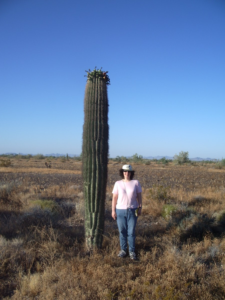 Cacti thrive in the shadows of catastrophes
