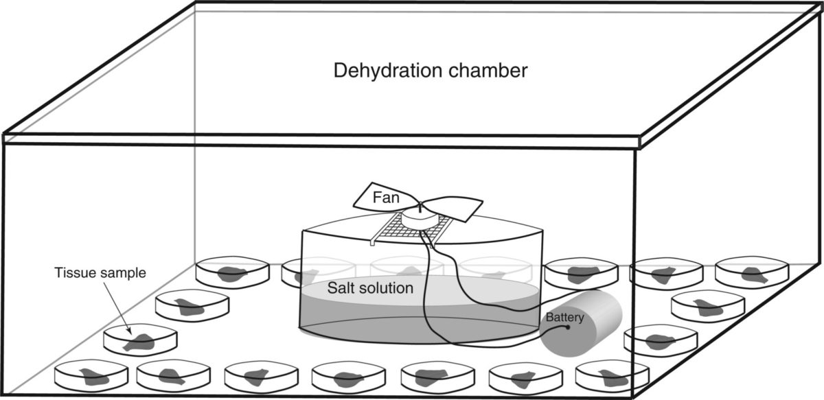Sex differences and plasticity in dehydration tolerance