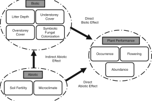Conceptual model of direct abiotic and biotic and indirect abiotic effects on Treintalis performance.