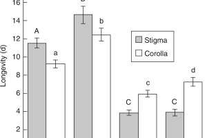 Floral longevity measured as time (d) until wilt of stigma (grey bars) and corolla (white bars), under different pollination conditions.