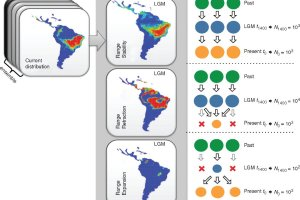 Schematic representation the demographic history scenarios simulated for the 23 populations of Eugenia dysenterica sampled in the Cerrado biome, and their geographical representation as predicted by ecological niche models (ENMs