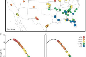 Variation in reproductive timing across Helianthus