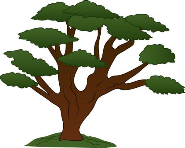 family tree usc