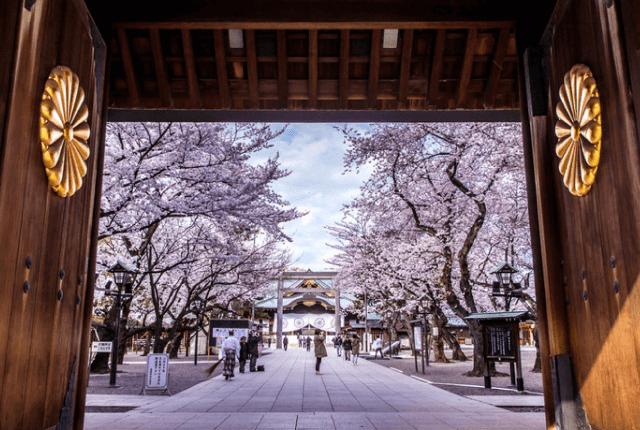 東京(靖国神社)の桜の開花宣言の基準となる標本木の場所はどこ?アクセス方法は?