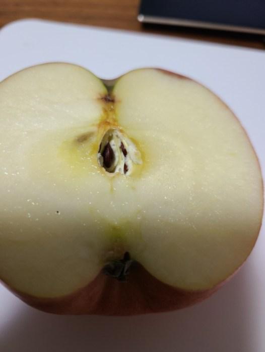 りんごの芯に白いカビ1
