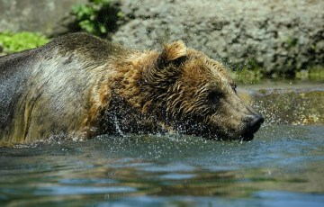 bear-371348_640