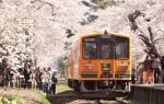 五所川原市 金木桜まつり