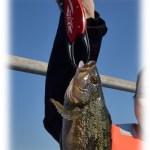 青森の海づり「青森・浅虫」で10月30日海釣り大会/青森「女子○ジョシマル」開催!