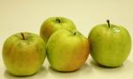 青森県産リンゴ の新品種「はつ恋ぐりん」限定販売!