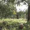 2017 青森  大型「台風18号」で収穫控えたリンゴに被害も!⦅9月18日⦆