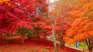 2017 八戸【紅葉・見ごろ】市民の森不習岳⦅10月20日~11月10日⦆