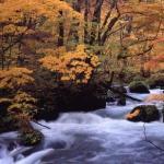 2017 奥入瀬渓流の紅葉 見ごろ!