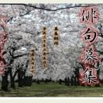 AOMORI「つがる市 春まつり・俳句大会」開催!