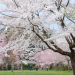AOMORI「さんのへ春まつり」開催!