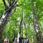 八甲田山「田代高原ブナ林散策道」がオープン!@2018年8月11日日