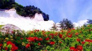 青森・平川市「白岩まつり」開催!@2019年5月25日~26日