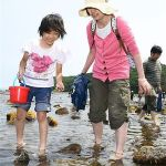 青森県・平内町「ホタテ拾い」にぎわう/夏泊半島・大島でイベント
