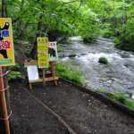 クマ出没注意:奥入瀬渓流遊歩道の一部立ち入り禁止