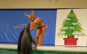 青森県営浅虫水族館イルカパフォーマンスクリスマスバージョン2019