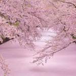 【2020新春ガイド】「東北のイベント」:青森、岩手、秋田、山形、福島