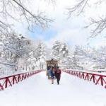 青森屋 雪化粧した公園を巡る「ストーブ馬車」運行 期間:2020年12月1日~2021年3月31日